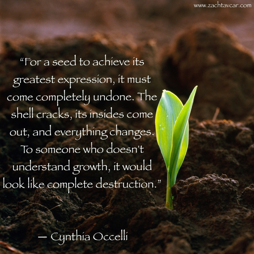 cynthia occelli quote, inspirational quote, best life coach